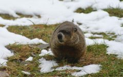 What's Groundhog's Day?
