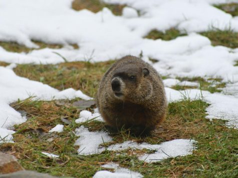Whats Groundhogs Day?